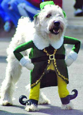 177330_st_patricks_day_dog_1